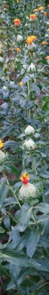 花儿这么好看,谁知道这是什么花呢?